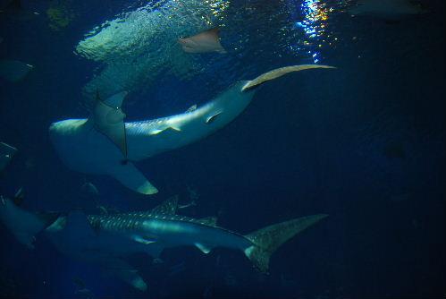 美ら海水族館とは