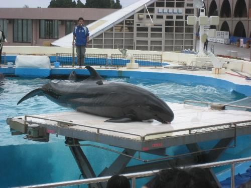 無料で観られるイルカのショー